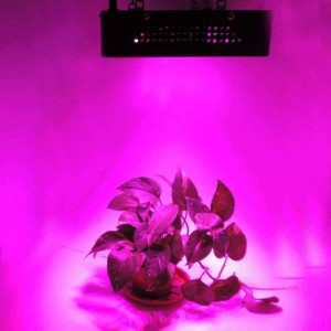 Panneau LED POWER-GROW 120W culture indoor